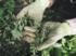 Jak zlikvidovat plevel